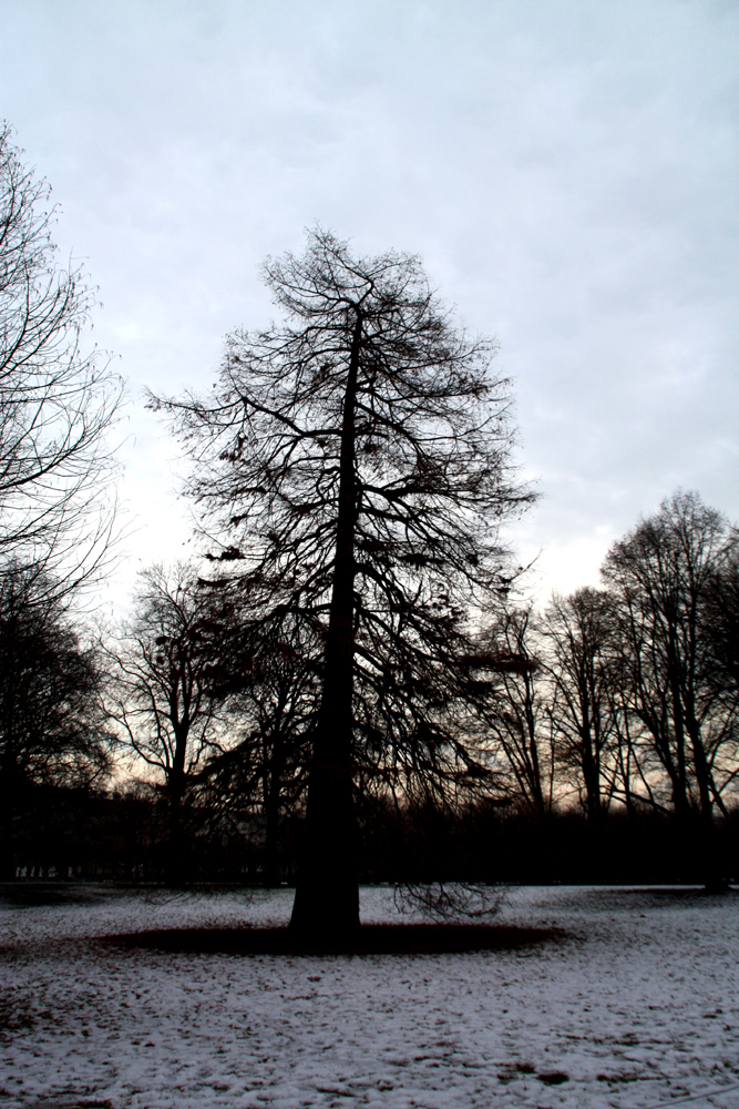 Kahler Baum im Schlossgarten Charlottenburg. Foto: Helga Karl