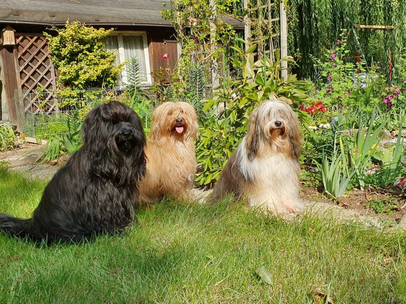 Yeshi, Bya-ra und Milka