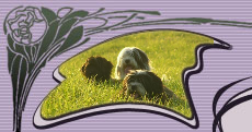 """Tibet Terrier-Zwinger """"von Almaka"""""""