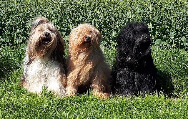 Milka, Bya-ra und Yeshi im Rapsfeld