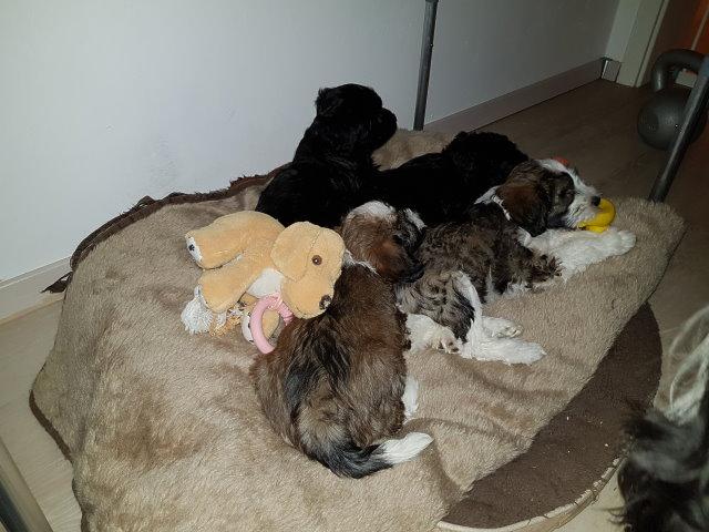 Am Ende konnten sie aber doch im Körbchen prima schlafen :-)