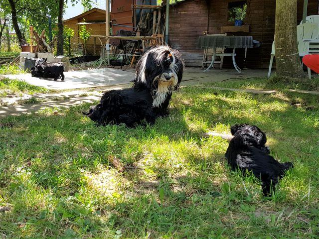 Lisha und die Kinder