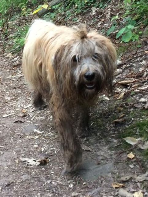 Shani (I-Wurf 2018): im Wald beim Tibetertreffen in der Pfalz