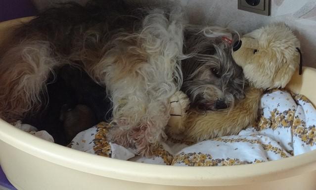 Mama Milka in Teddys Armen