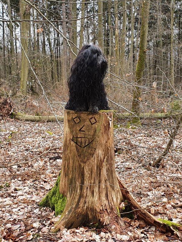 Yeshi - Herr über den Wald