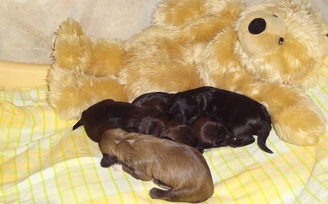 """Kuscheln mit Mama """"Teddy"""""""