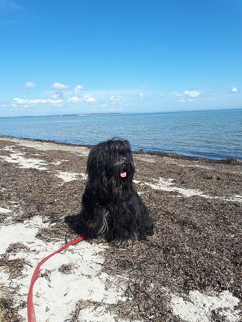 Yeshi an der Ostsee - Habernis-Hundestrand