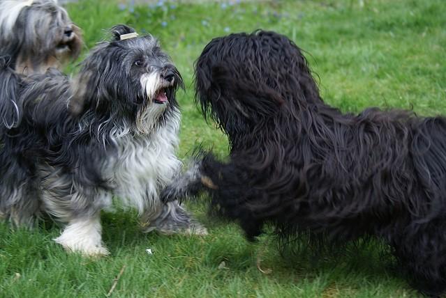 Jita und Yeshi beim Spielen