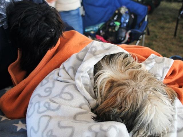In Decken gewickelt lässt es sich ruhig schlafend warten