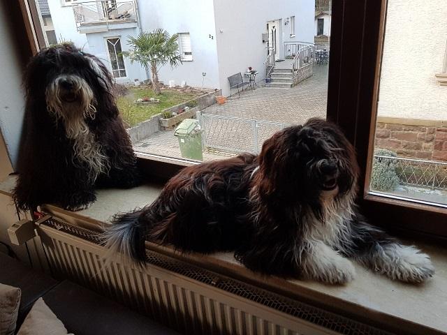 Die Jungs Mihu und Yaro bewachen die Ritterstraße