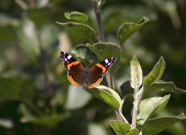 Flora und Fauna in meinem Garten - August 2014