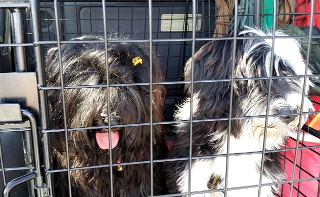 Yeshi und Lisha auf der Heimfahrt nach der Ausstellung Zirndorf