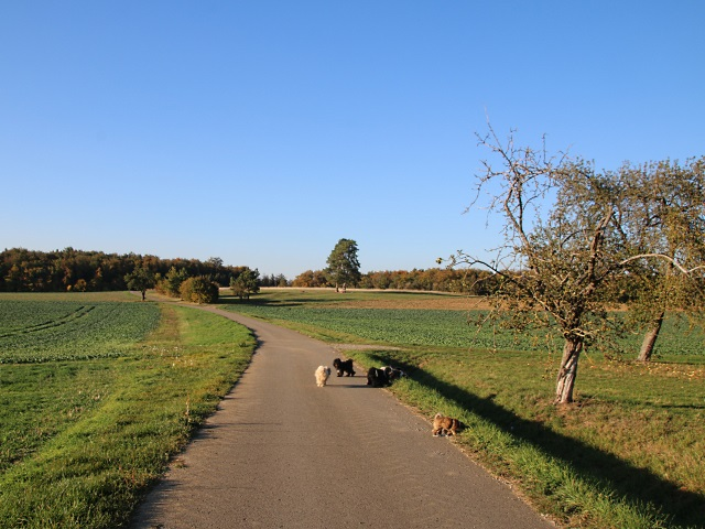 Aufbruch zum Spaziergang