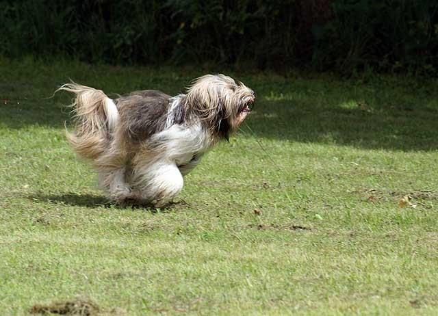 Renn, Milka, renn!