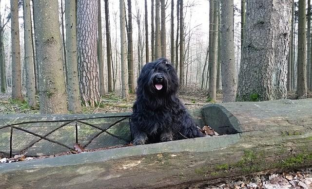 Yeshi - König der Wälder
