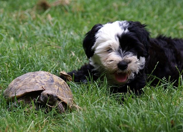 Die Schildkröte gehorcht einfach nicht und spielen will sie auch nicht