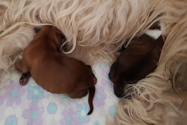 Am Nachmittag: Heute nur Bilder mit hellem Zobelhaar als Hintergrund - Fiona hütet ihre neugeborenen Kinder!
