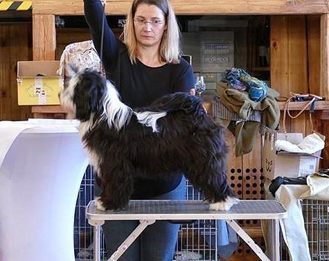 Lisha beim Handlingkurs November 2015
