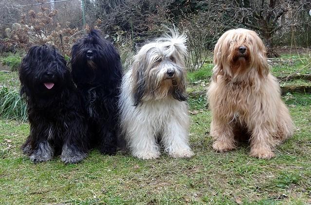 Yeshi, Kar-mi, Milka und Bya-ra im Januar 2015