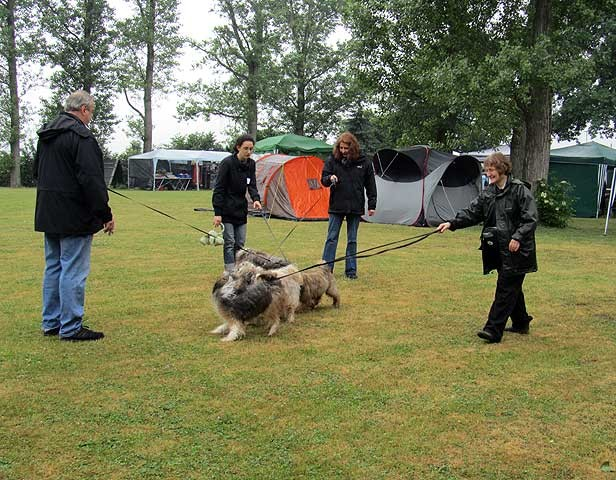 Ein Tibet-Terrier-Knäuel: Milka mit ihren Freunden