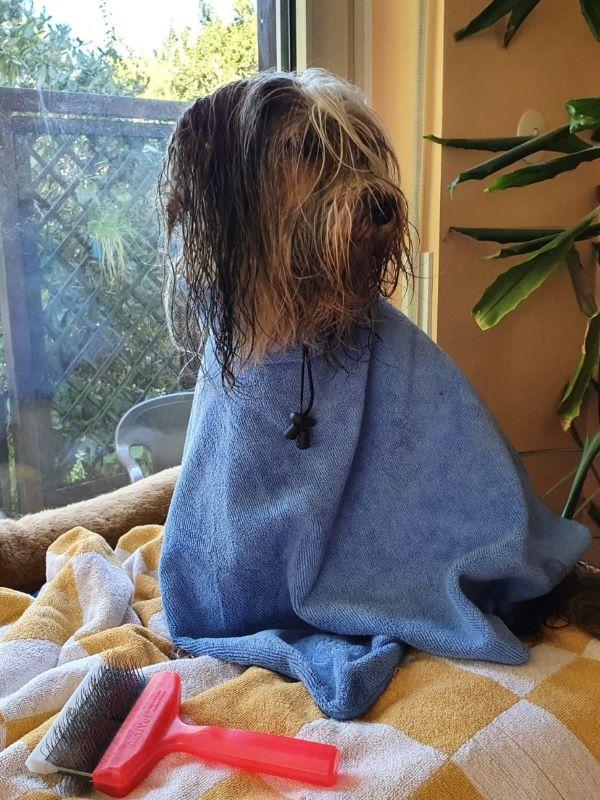 Milka muss vor dem Urlaub noch baden