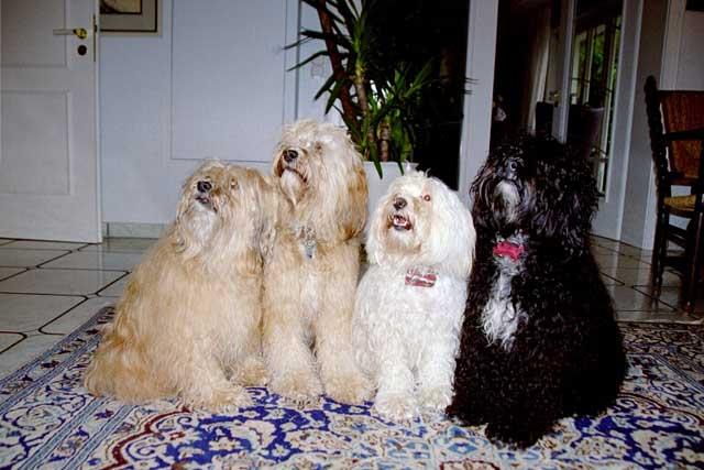 Luna mit Family: v.l. Indra, Bya-ra, Lund und Bhayani