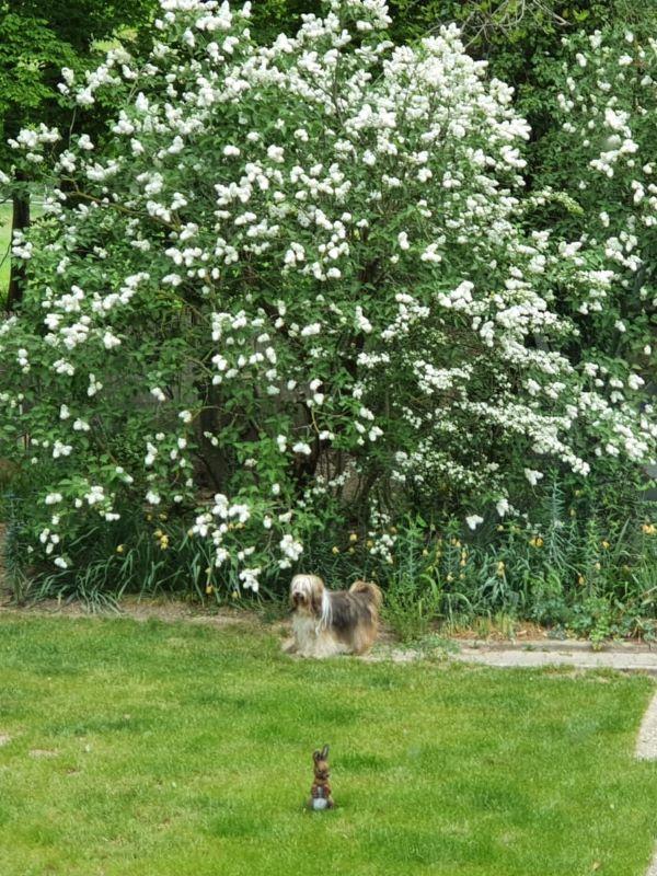 Endlich hat Milka den Osterhasen gefunden!