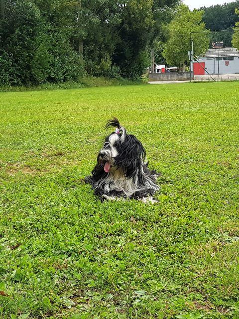 Lisha ganz abgekämpft, alle Hunde die da waren ihre Kinder - außer Mihu ;-)