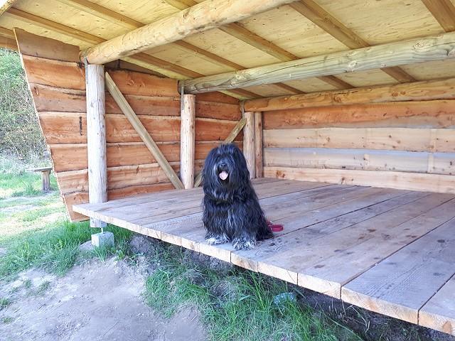 Yeshi im Shelter in Dänemark
