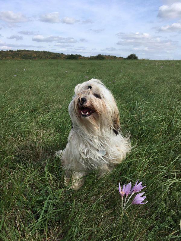 Ida (I-Wurf 2018) Blumenmädchen ♥