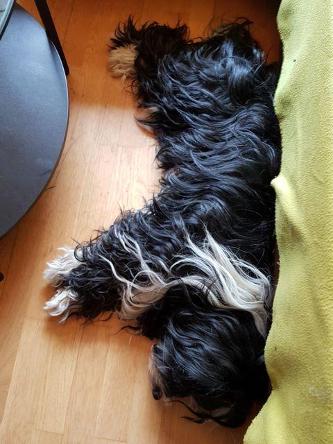 Lisha schläft viel, sie erholt sich