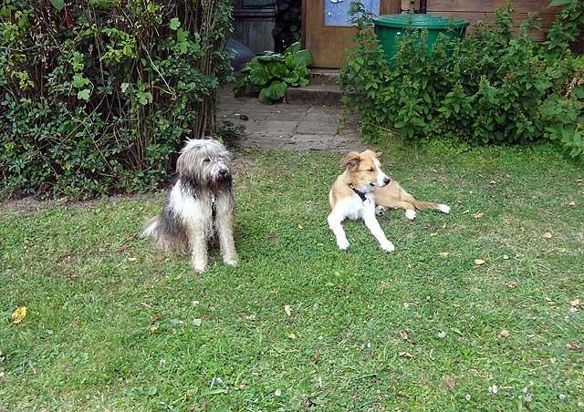 Milka und Dobby