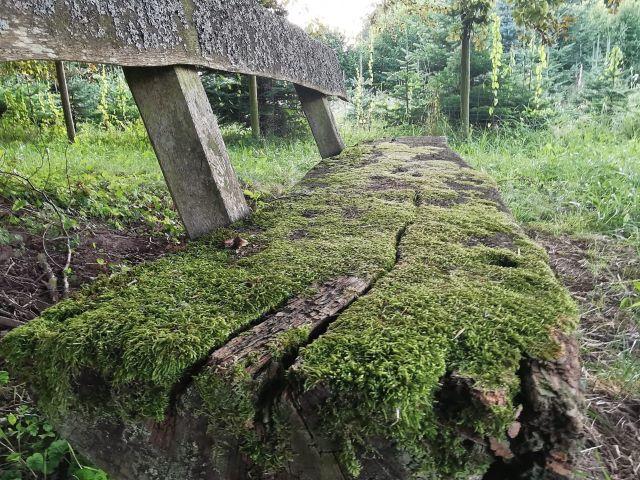 Waldspaziergänge
