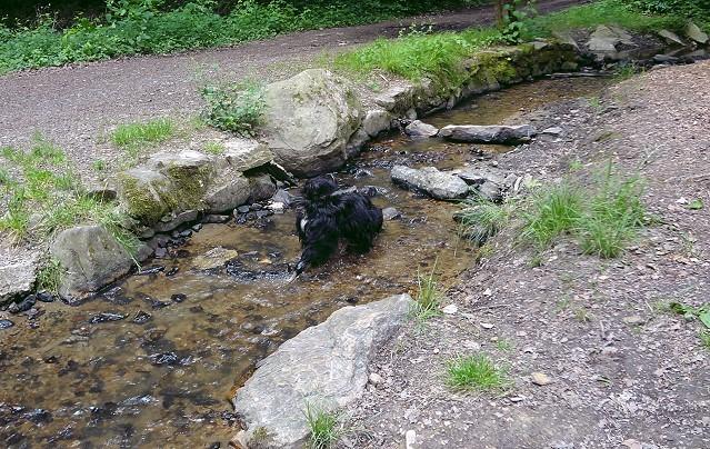 """Yeshi, mein """"tibetischer Wasserhund"""" - Tibet-Terrier-Rüde, 7 Monate alt"""