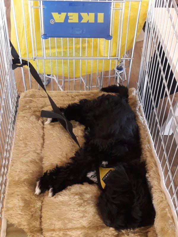 Mia (J-Wurf 2019) findet Ikea zum Schlafen langweilig!