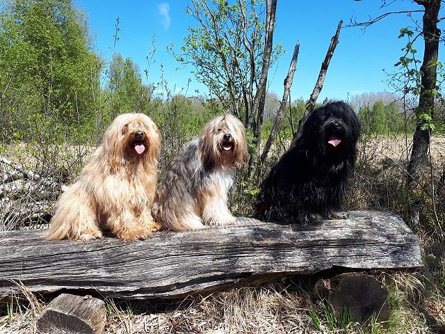 Drei Moor-Leichen