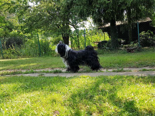 Lisha natürlich immer dabei, beim Tierarzt und im Garten!