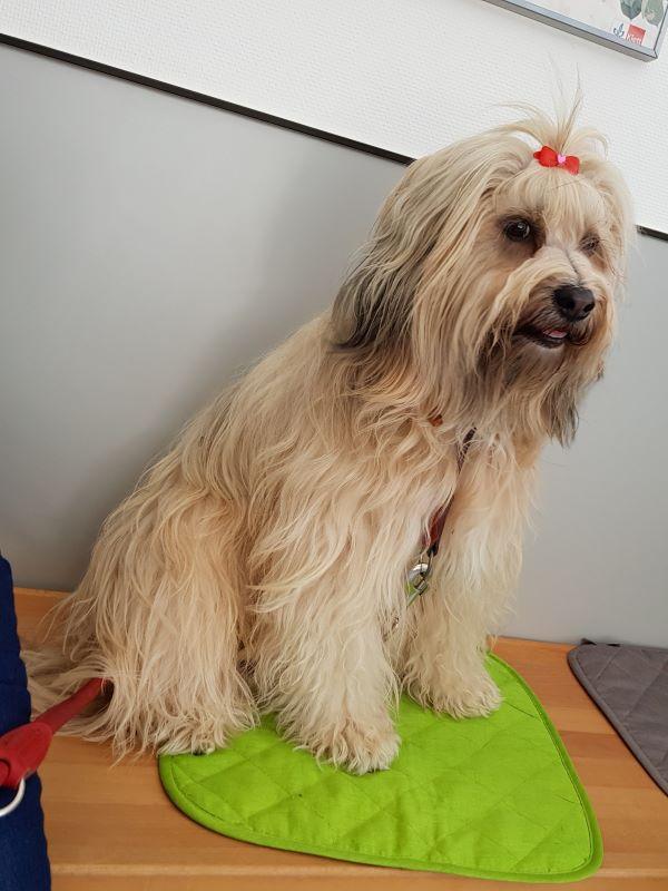 Fiona wartet beim Tierarzt