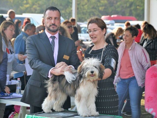 CACIB Komarom 18: Bester Junghund, Best of Breed BOB, Crufts Qualifikation!