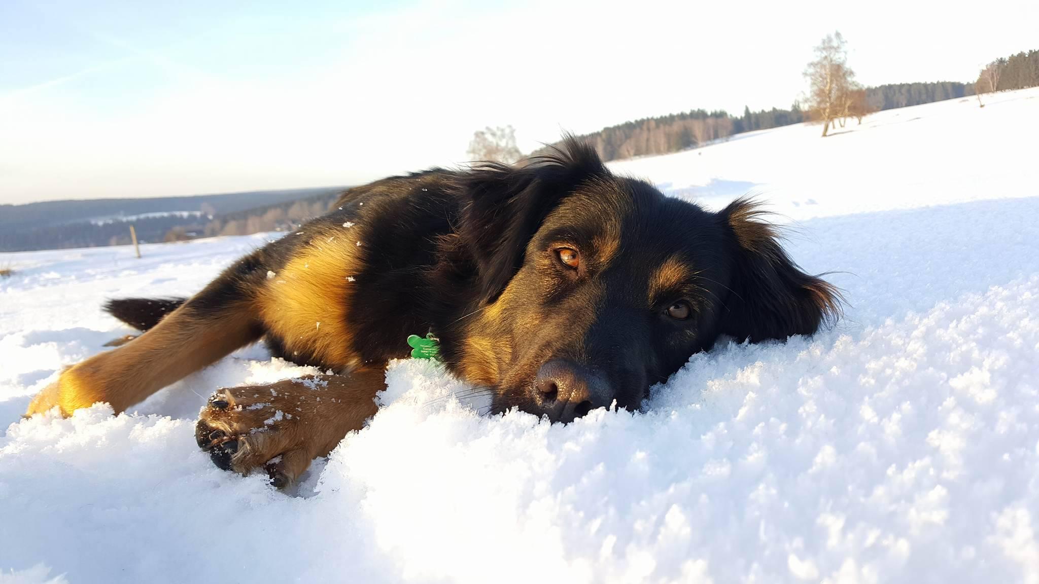 Urlaubsgast Nougat liebt den Schnee