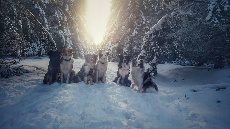im Rudel durch den Schnee
