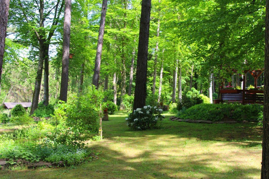 Blick in den Waldgarten