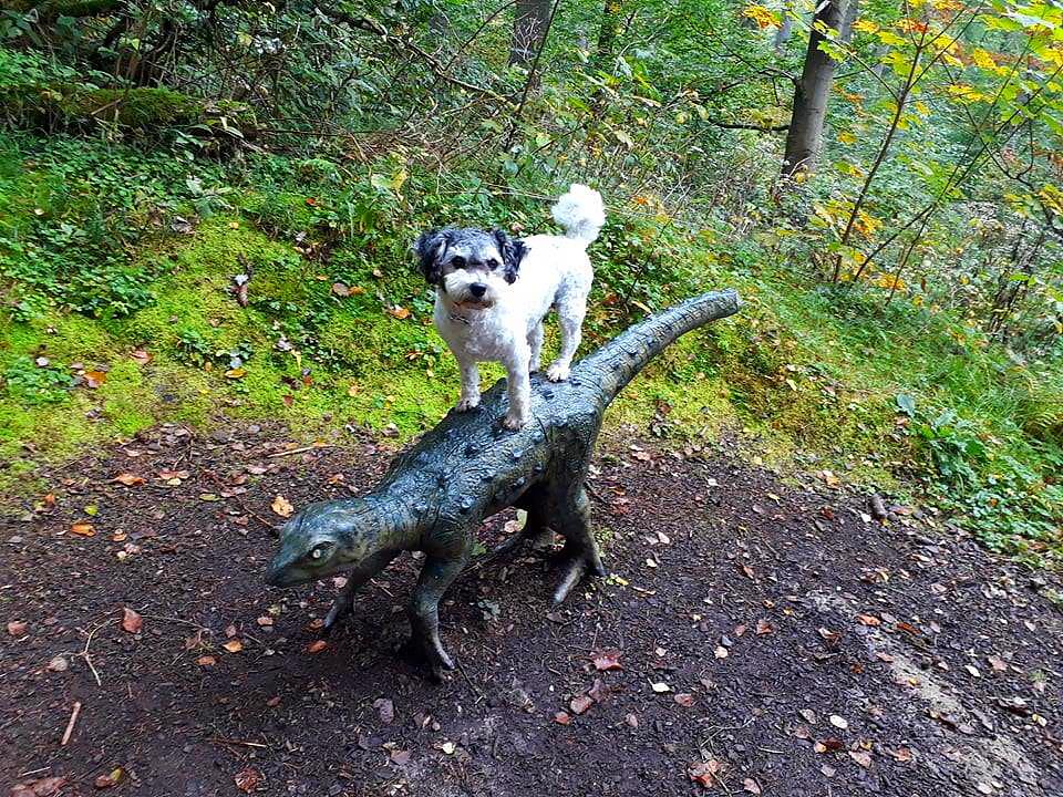 Urlaubsgast Meggi hat Spaß mit den Ursauriern am Bromacker