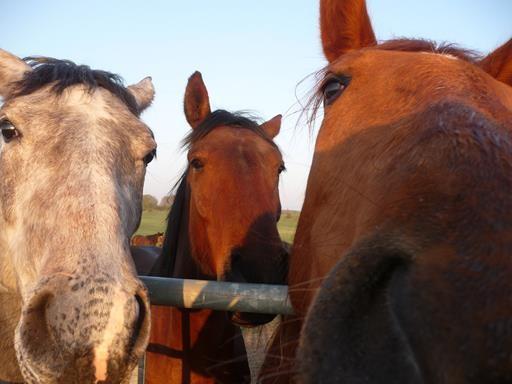 gegenüber vom Haus stehen 22 Pferde! Soo schön....