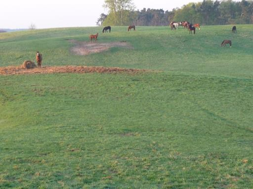 die Pferdewiese gegenüber