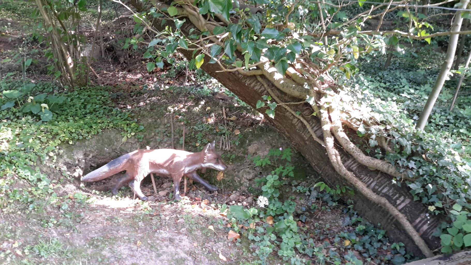 Fuchs vor seiner Höhle