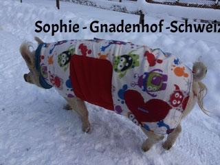 Sophie vom Gnadenhof Luna in der Schweiz
