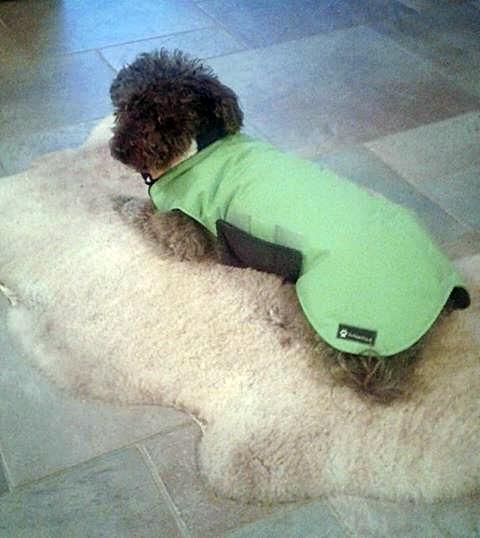 Thermo-Hundemantel, Wintermantel, Hundemantel Maßanfertigung,  Hundemantel nach Maß