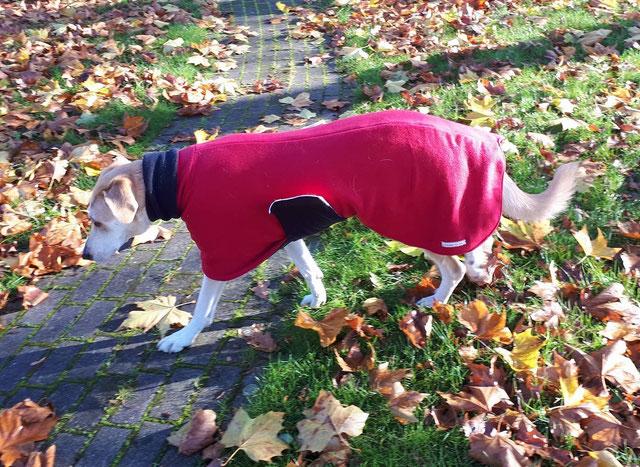 Hundemantel Probemantel Maßanfertigung