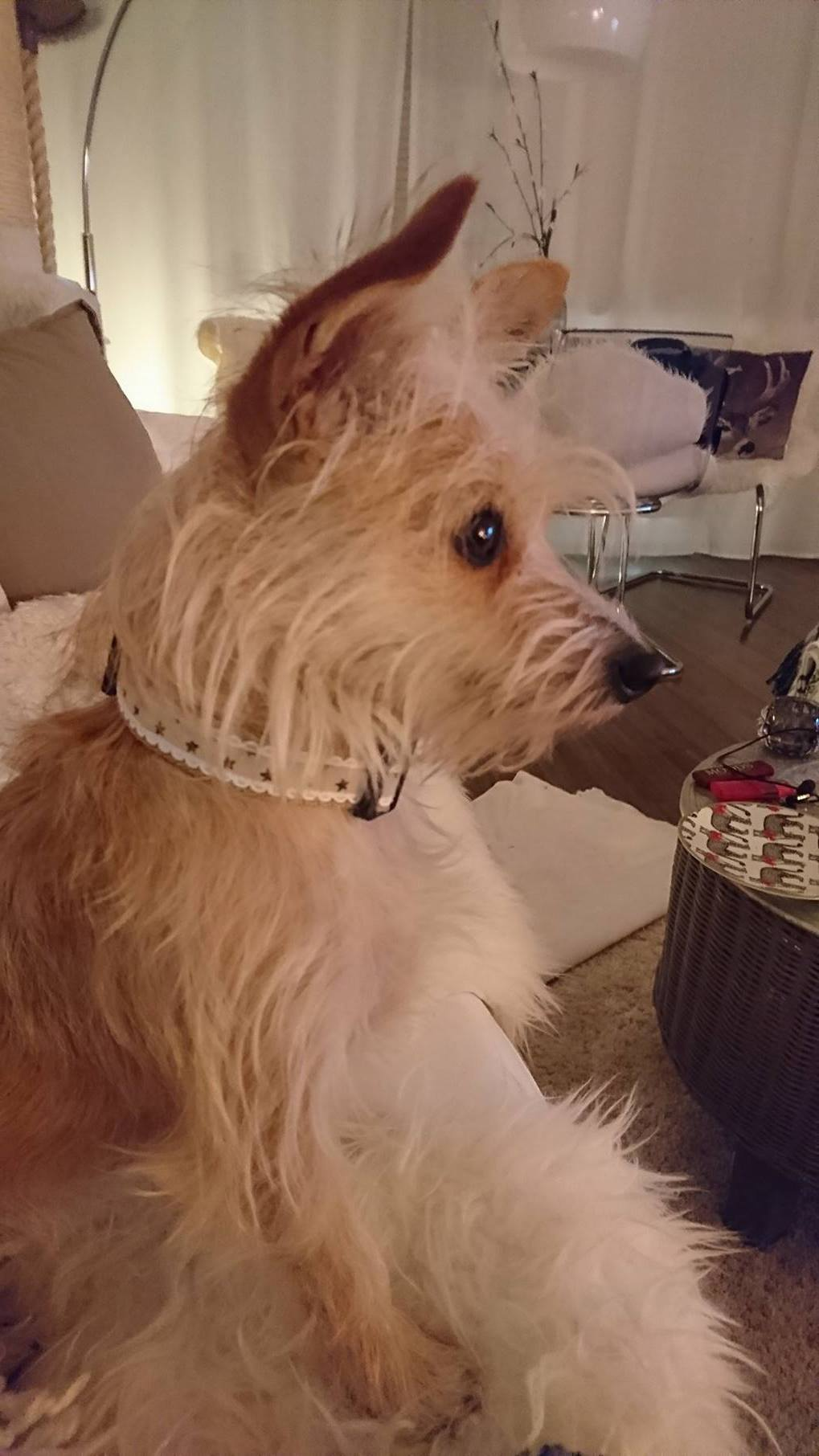 Halsband TheHappyDog, Hundemantel Maßanfertigung